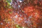 さくら通信【時事コラム/慰霊祭ご案内】第37回11月19日号