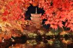 さくら通信【訃報/11月26日慰霊祭】第38回11月23日「新嘗祭」号